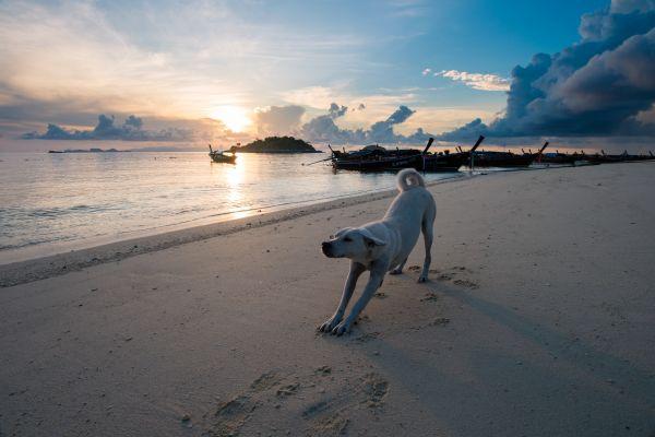 Hunde gymnastizieren mit Spaß! Tages Seminar mit Tina Roth 16.11.19